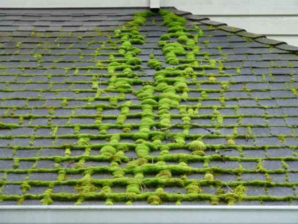 Cleaning Algae and Moss from a Roof