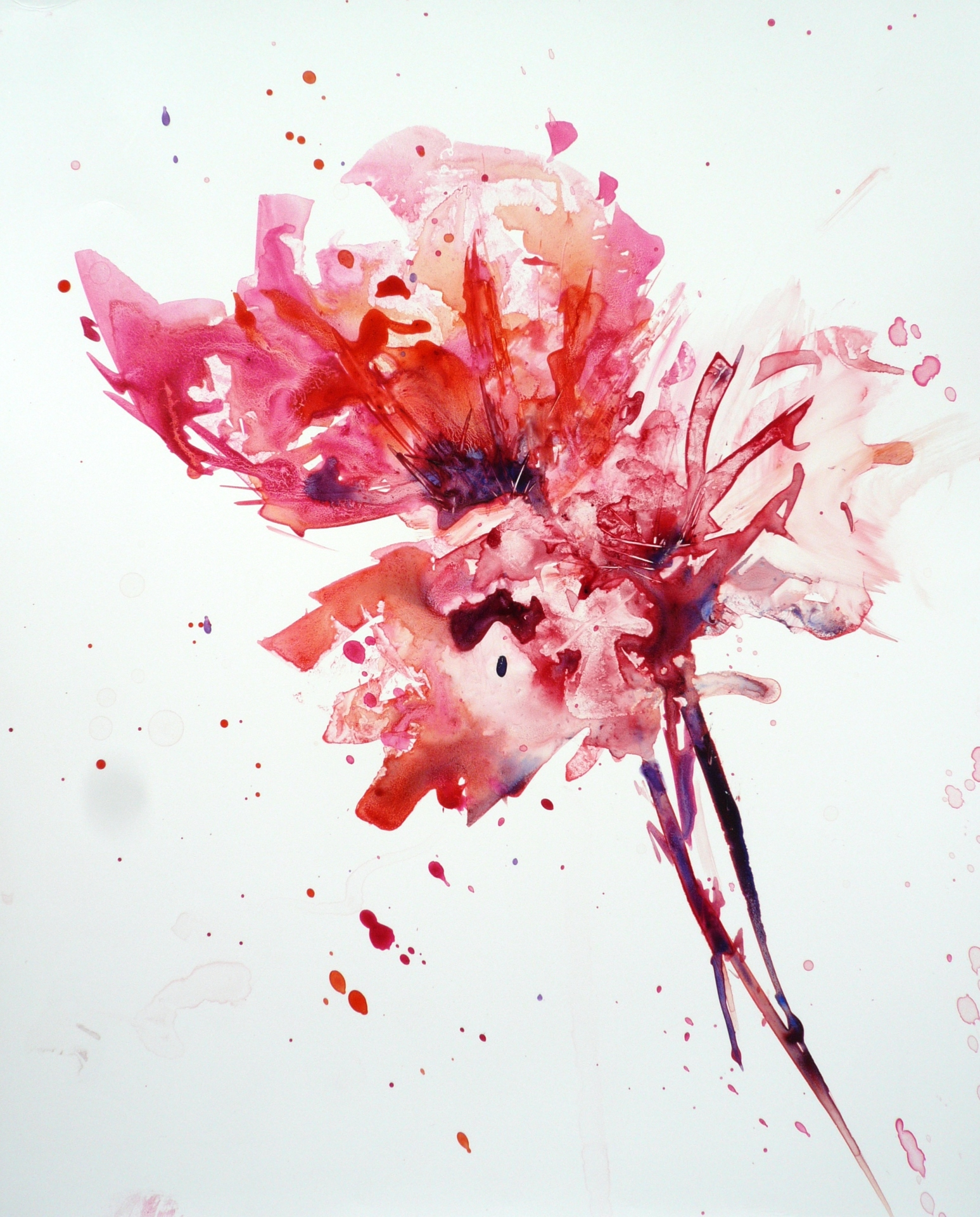 watercolour painting of a bunch of dark pink and red flowers with pointed petals and stems