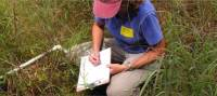 Experienced staff collecting wildlife data