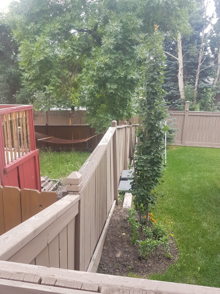 Old Rotting Privacy Fence