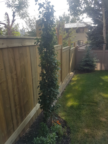 New 6' Fortress Fence