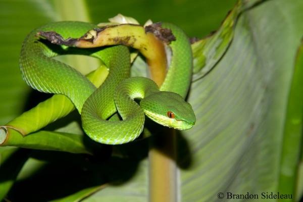 Viper In The Palms