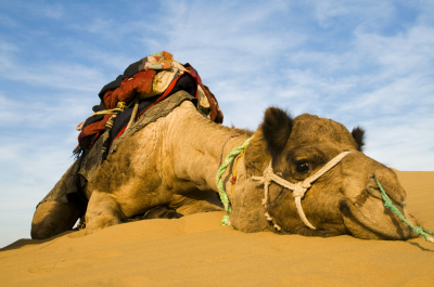 Desert Safari, Camel Rides & Camping