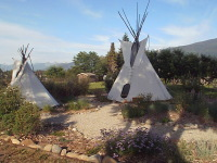 2 tipis and native plantings in bloom