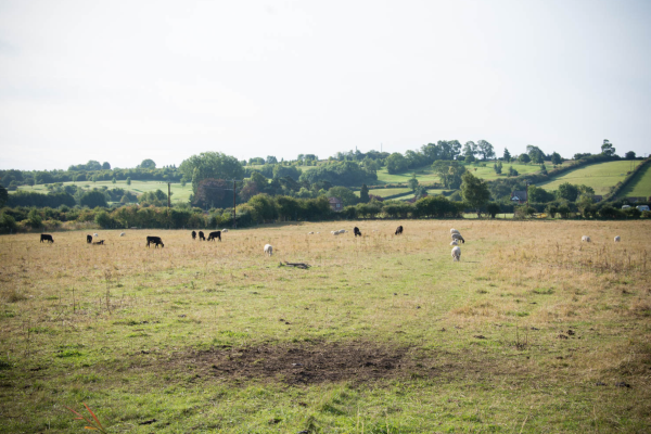 Fields... - Image @ Stuart Noall