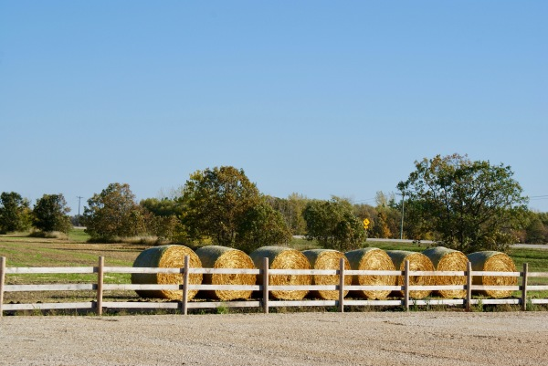 Haybales along the fence