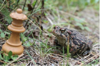 Toad and Queen