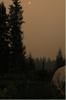 2017 forest fire summer sky