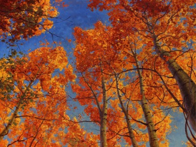 36 x 48     Autumn Wild     Oil