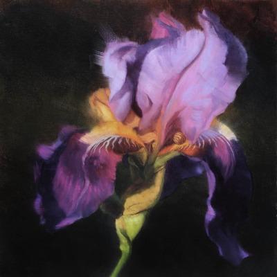 20 x 20     Dawna's Iris      Oil
