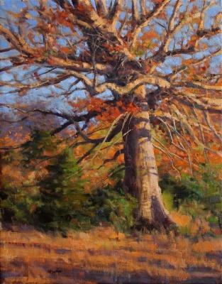 20 x 16     Alabama Oak     Oil