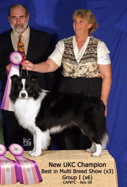 UKC Champion, 3 Best In Shows, and Four Group Firsts