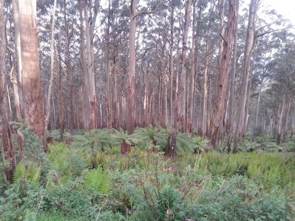 forest on Saint Leonard's mountain