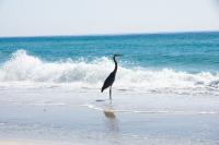 Pensacola Beach Crane-