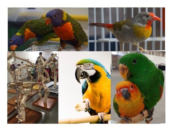 Exotic Birds!
