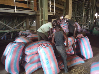 BUY SOYBEAN SEEDS FROM BENIN & TOGO