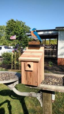"""Blue Bird 4 /1/2""""  $65"""