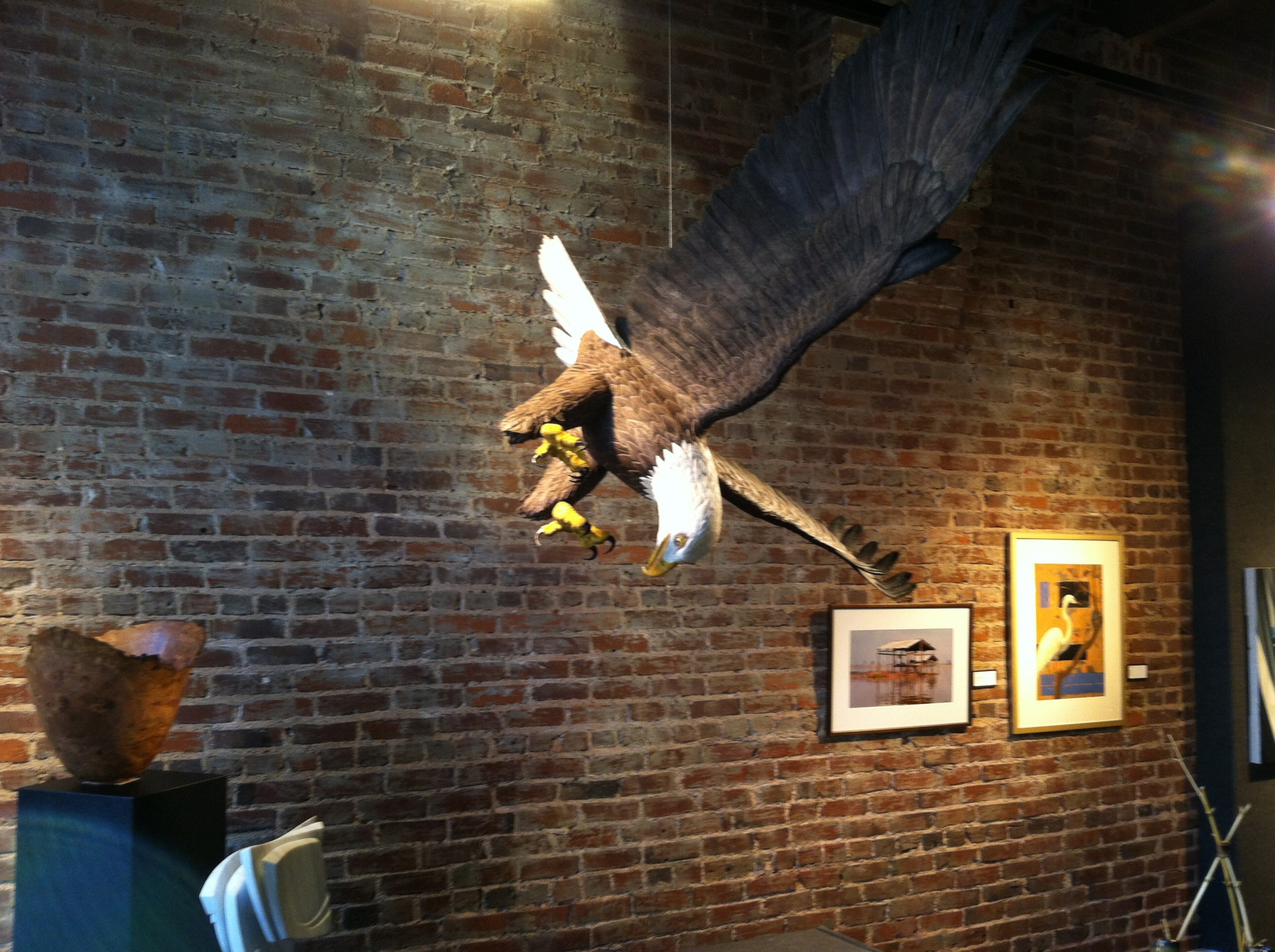 Eagle on display