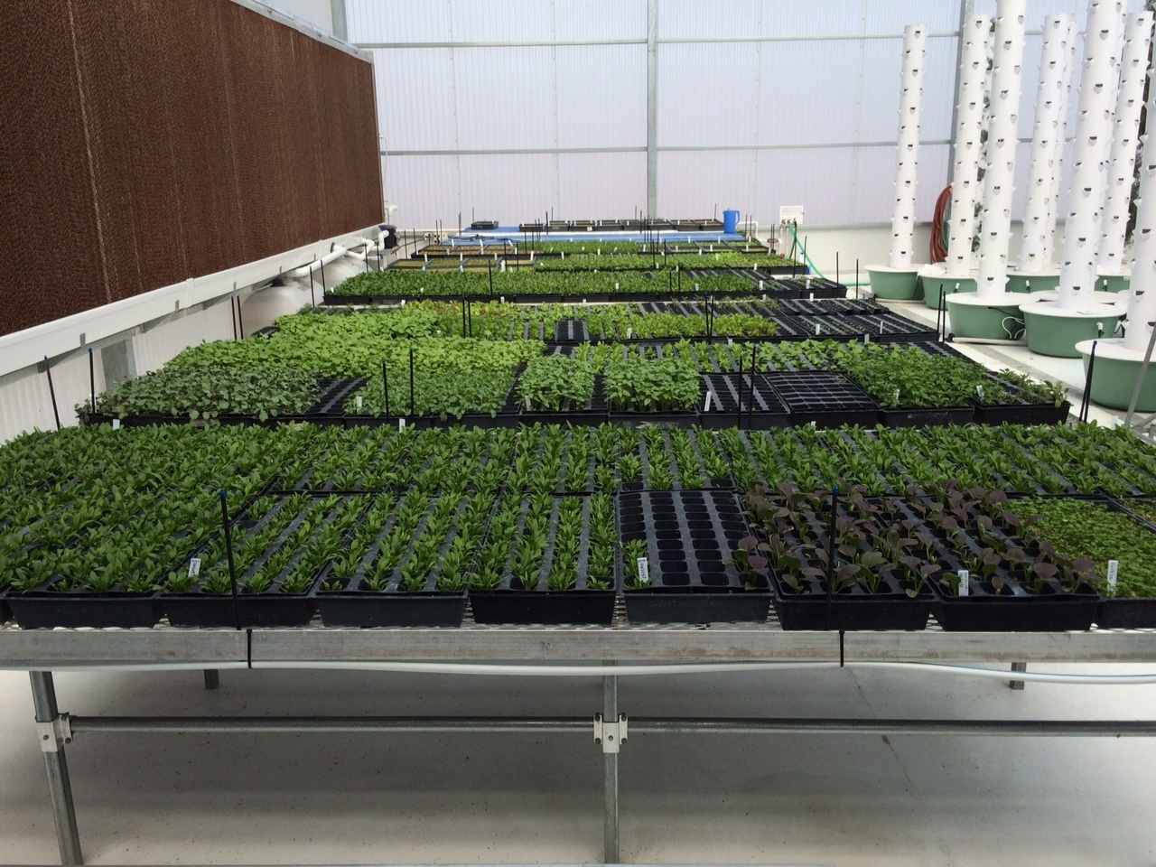 Propagation Benches