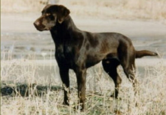 GMPR Cajun of Black Forest MH