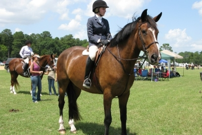 Equine Mortality