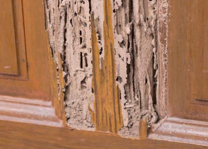 wood trim & cabinets