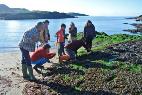 Seaweed Foraging