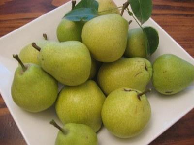 Keiffer Pear tree