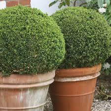 Sprinter Boxwood