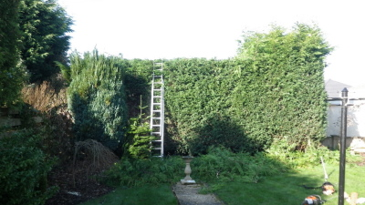 We can maintain or clear gardens, reduce and trim hedges or just a all round tidy.