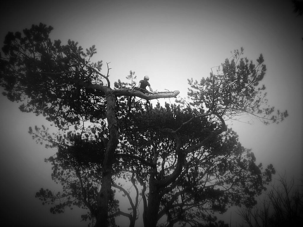 For fully insured tree work, tree surgery, crown work, stump work and site clearance throughout Anglesey and Gwynedd at competitive prices call Simcox Tree Services