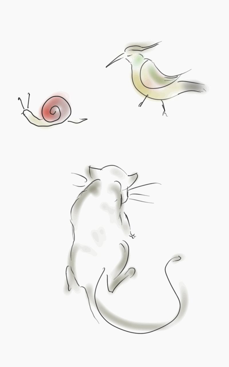 Cat, bird, snail