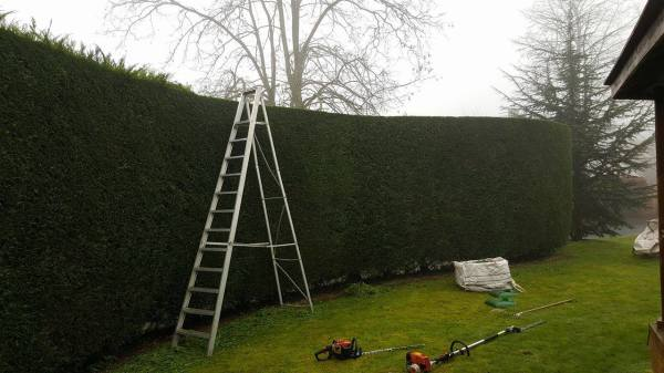 Hedge cutting and Pruning