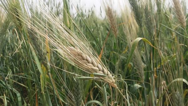 Nabea El Hayat - Farming project