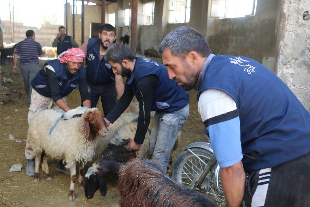 Nabea El Hayat - Livestock project