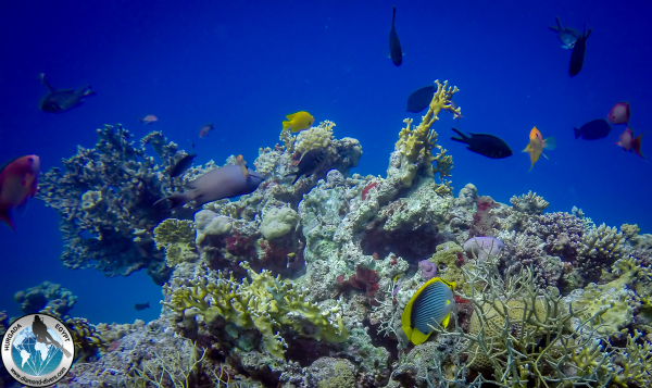 Scuba diving Hurghada Red Sea Egypt