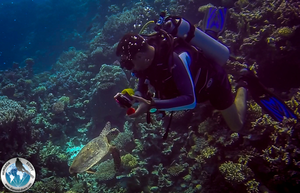 Scuba diving Hurghada Red Sea Egypt, Turtle playing with Ahmed Hassanein