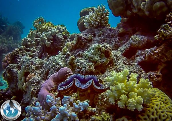 Scuba diving, Hurghada, Red Sea, Egypt
