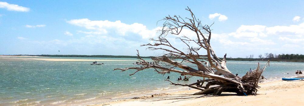 Baum Strand