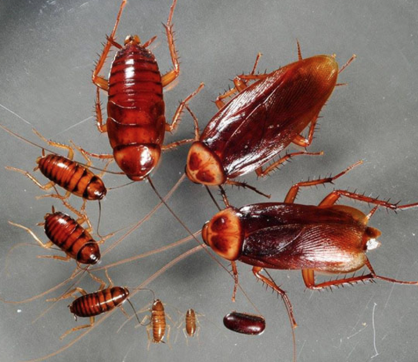 kill a roach