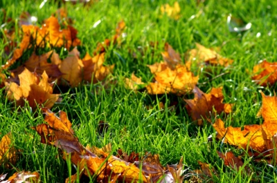 Lawn Clean Up/Leaf Removal