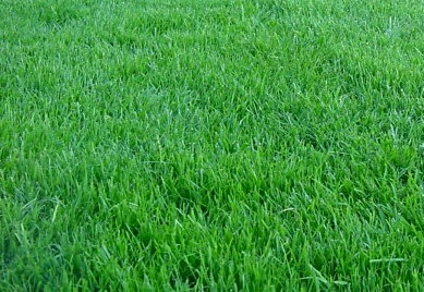 Lawn Treatments