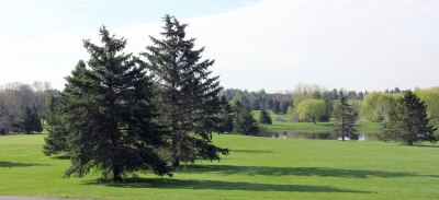 The Golf Courses