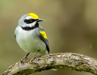 Juniata Valley Audubon chapter connects with Jilgueros Bird Club and Lenca Farms in Honduras