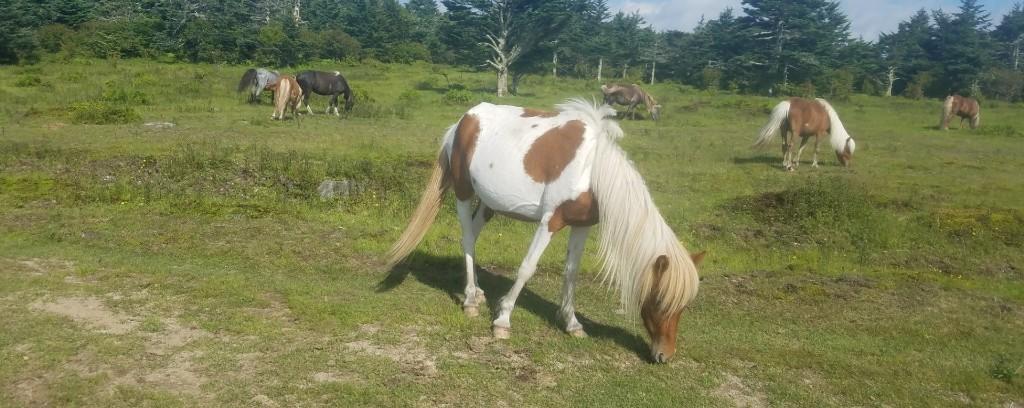 Day 31...Wild Horses
