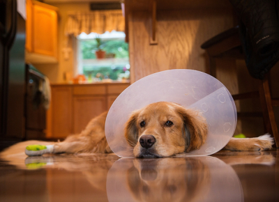 10 Reasons Why You Shouldn't Spay/Neuter Your Dog