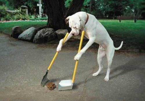 Housebreaking your Dog