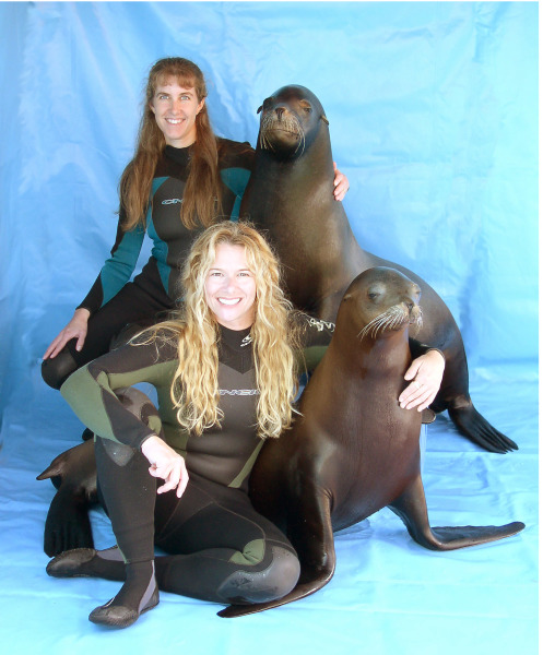 Sea Lions Encounters 2:30, 6:00 y 9:00pm