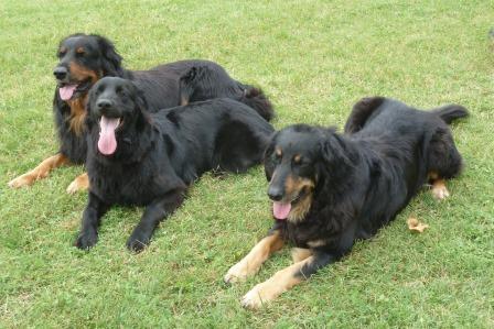 L'élevage canin