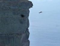 "alt=""Diving off Cliff"""
